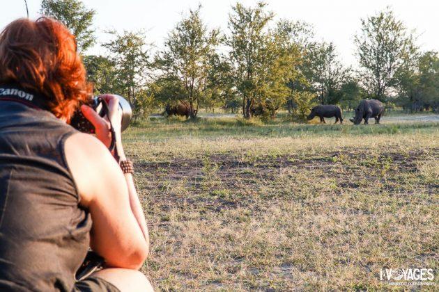 Rencontre avec les rhinocéros