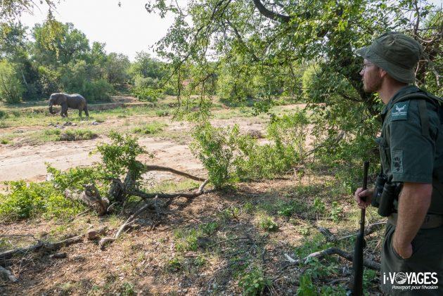 Safari à pied