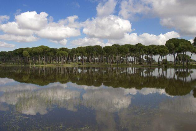Doñana Pinares Agua