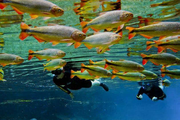 flutuacao_-_snorkeling_at_rio_da_prata_-_daniel_de_granville