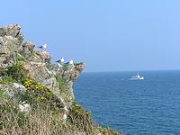 Goélands nichant sur le bord d'une falaise