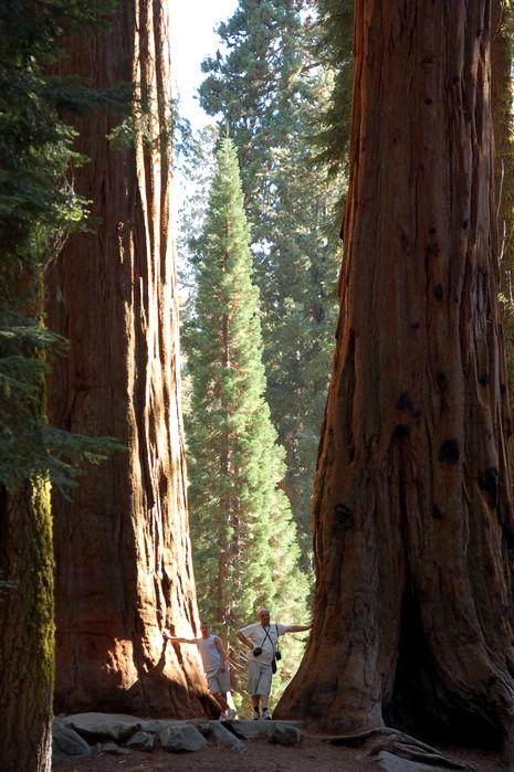 De grands arbres ou de petits hommes?