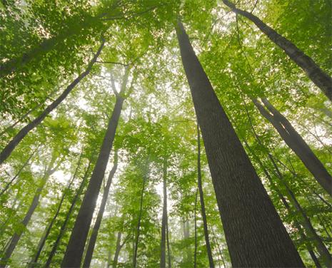 Informations pratiques brame du cerf en forêt de tronçais de mi