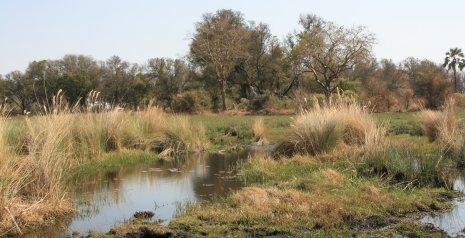Savane de l'Okavango