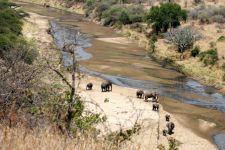 Eléphants dans la rivière Tarangire