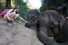 C'est doux la trompe de l'éléphnat ?