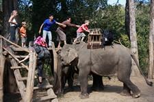 Théo monte sur l'éléphant