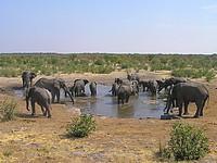 Eléphants - point d'eau d'Halali - Etosha