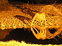 Girafe sur le plan d'eau éclairé d'Okaukuejo