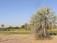 Lieu du bivouac proche d'Okongwati