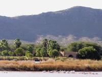 Environnement du Mont Etjo Safari
