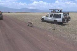 Tanzanie : safari dans le cratère Ngorongoro