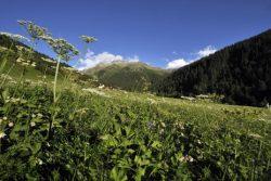 Le parc naturel de la vallée de Binn