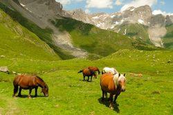 Pyrénées : plein les yeux dans le Béarn