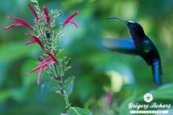 Dominique, l'île des Caraïbes 100% nature