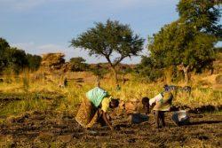 Voyage au Pays Dogon sur les pas du Maire de Sangha
