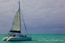 Croisière à l'île aux cerfs et nage avec les dauphins