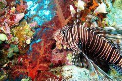 Lombok : Gili Meno
