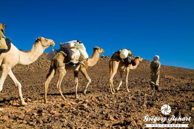 Caravane de dromadaires sur le plateau Tadjélahine