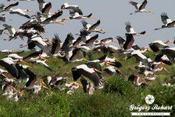 Tanzanie : un éden pour la faune sauvage
