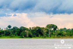 Immersion en Amazonie colombienne