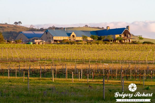 La Rosenview guesthouse est entourée par les vignes