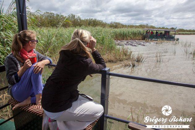 Observation d'hippopotames depuis notre bateau