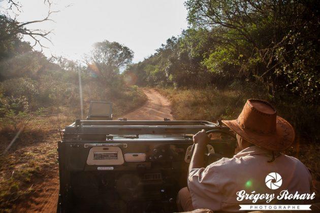 Pendant le safari avant l'orage