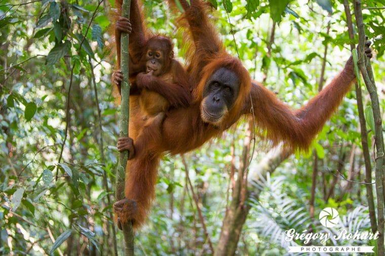 Sumatra-10raisons-GregoryRohart-2