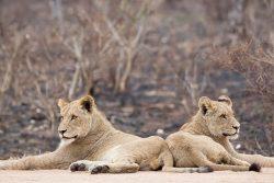 L'Afrique du Sud de Cape Town au Kruger