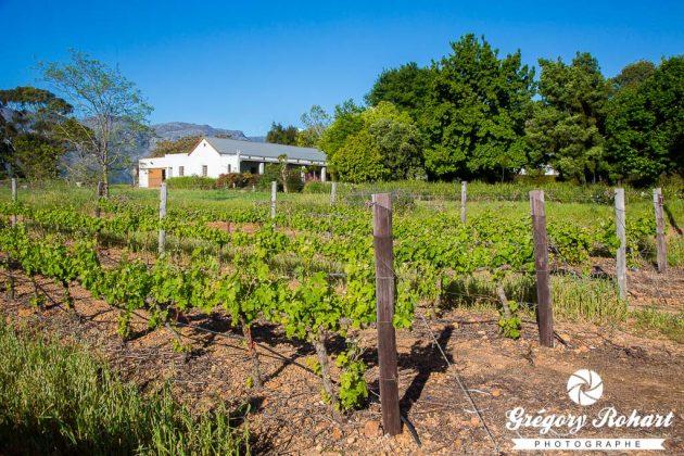 Rosenview guesthouse (Stellenbosch)
