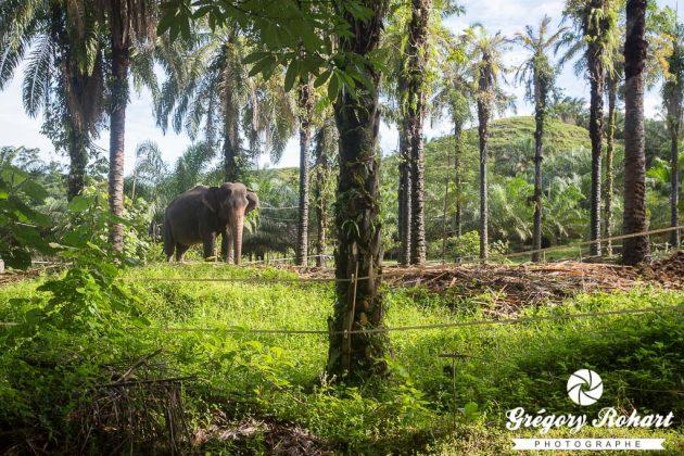 L'enclos des éléphants en attendant les balades