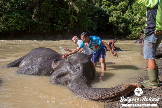 La toilette des éléphants : mon moment préféré !