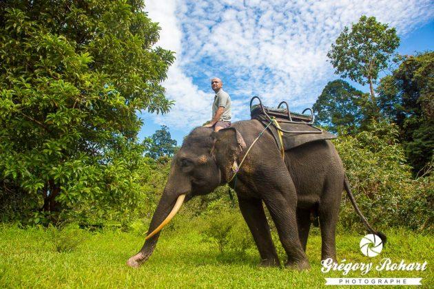 Sans le kornak, l'éléphant fait un peu ce qu'il lui plait