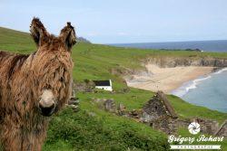 Irlande : balade printanière dans le Kerry