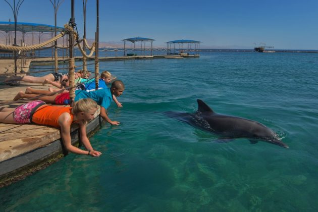 Dolphin reef @ Israël Tourism