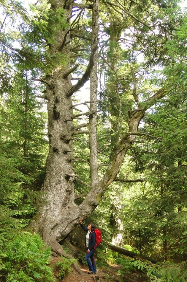 La forêt est partout. En certains endroits du parc national, elle n'a pas été touchée par la main de l'homme depuis plus d'un siècle.