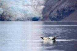 5 sites à consulter avant un voyage au Svalbard