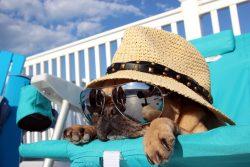 5 sites pour voyager avec un animal