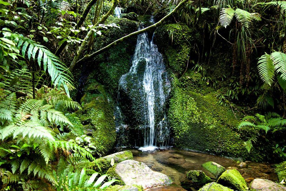 Voyage chez les Kiwis