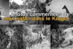 10 photos commentées de mon safari dans le Kruger