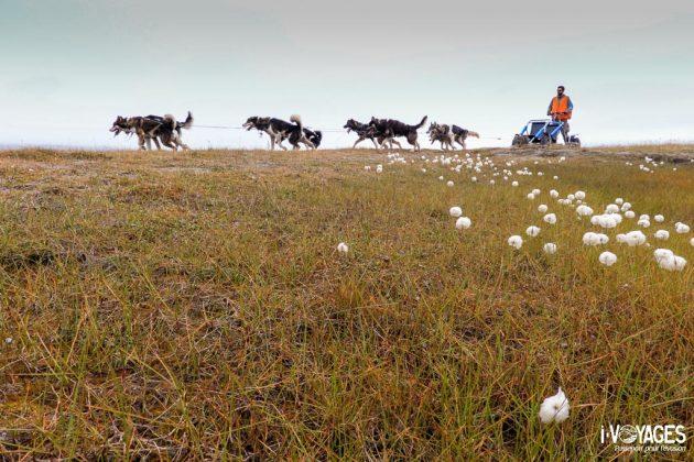 Traineau à chiens en été au Svalbard