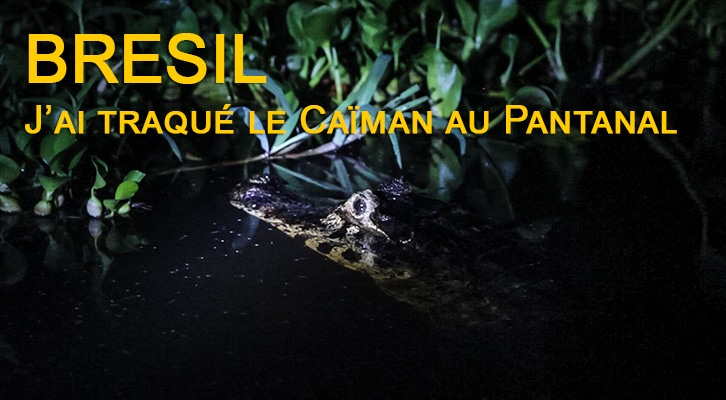 Brésil : J'ai traqué le caïman au Pantanal