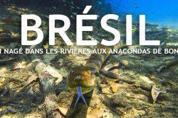 Brésil : J'ai nagé dans les rivières aux anacondas de Bonito