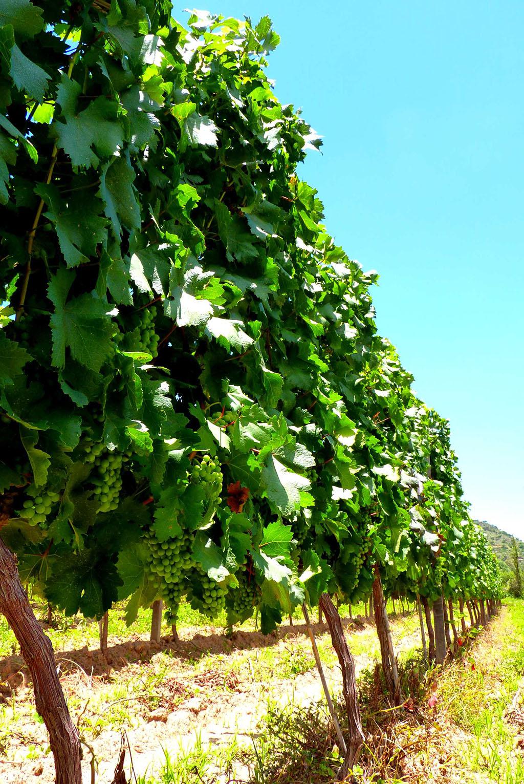 7-routes-des-vins
