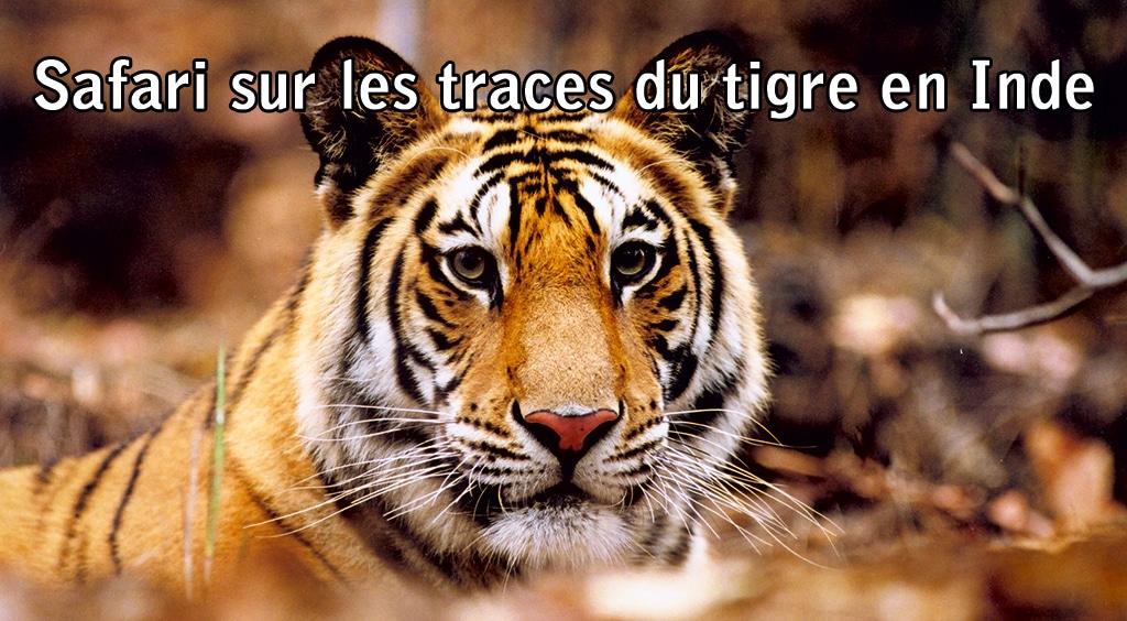 Safari sur les traces du tigre en Inde