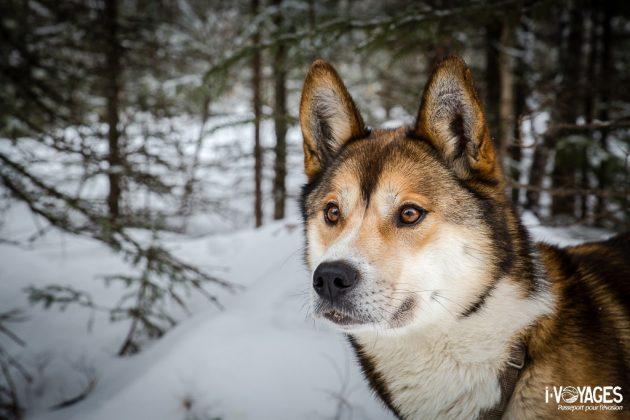 Tulu, mon chien de pointe