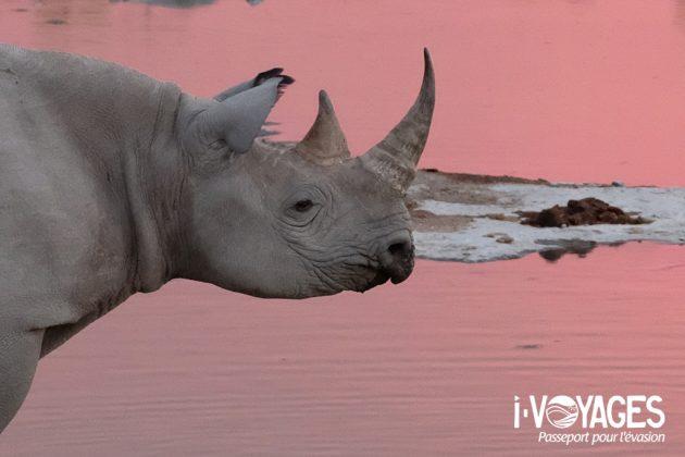 Tête de rhinocéros