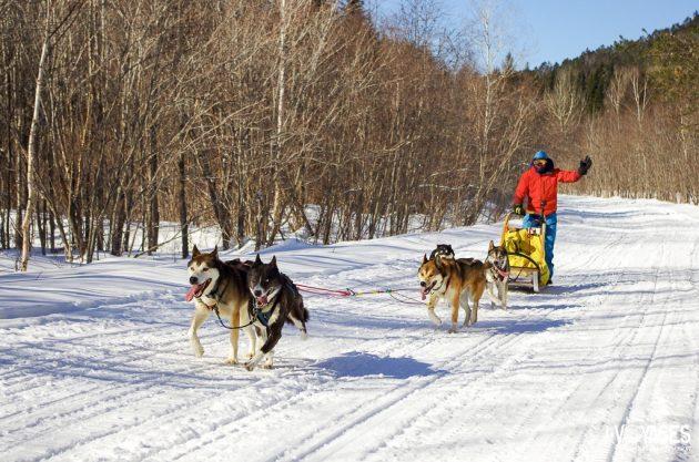Traîneau à chiens au Québec