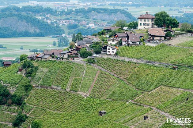 Vignes d'Ollon